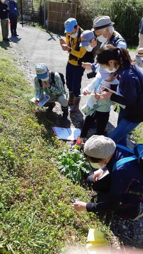 令和2年度自然観察会「春の植物の観察」